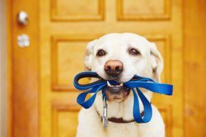 pet etiquette, dog etiquette